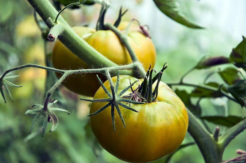 технология повышенной урожайности от сайта Ваш кулинарный путеводитель