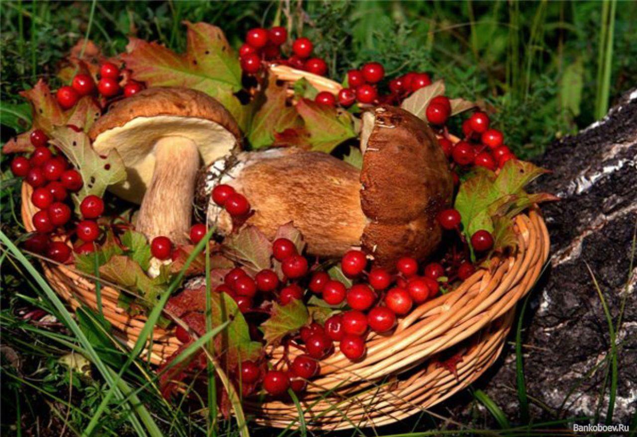 заготовки из грибов на зиму
